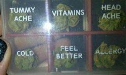 Finde viele neue Hanf Rezepte